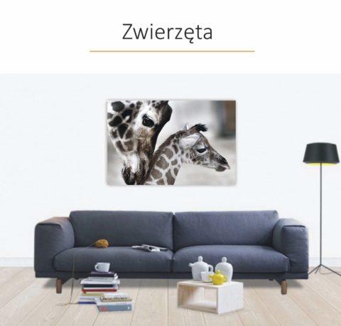 Obrazy Canvas Zwierzęta